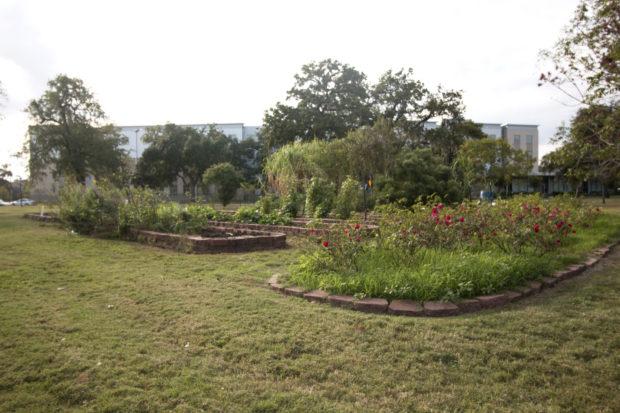 campus-garden-2-print